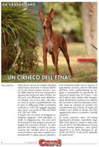Cirneco Photo